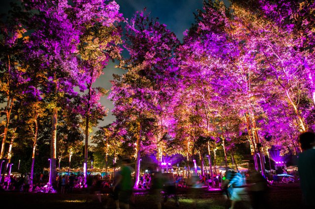 magical_woodlands_photographer